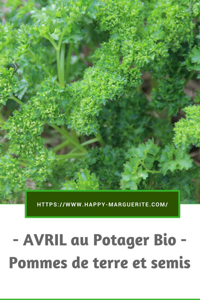 Avril au potager : pommes de terre, fraises et semis