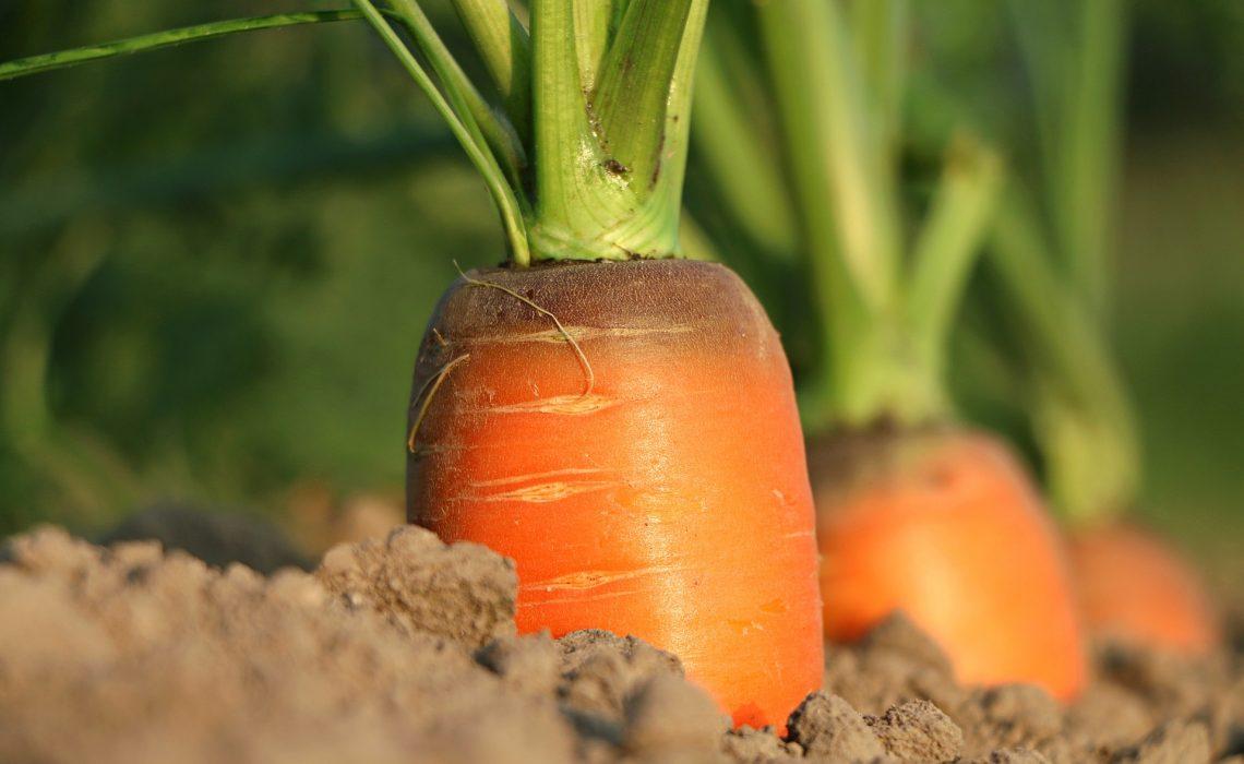 Manger local sain et de saison pas cher