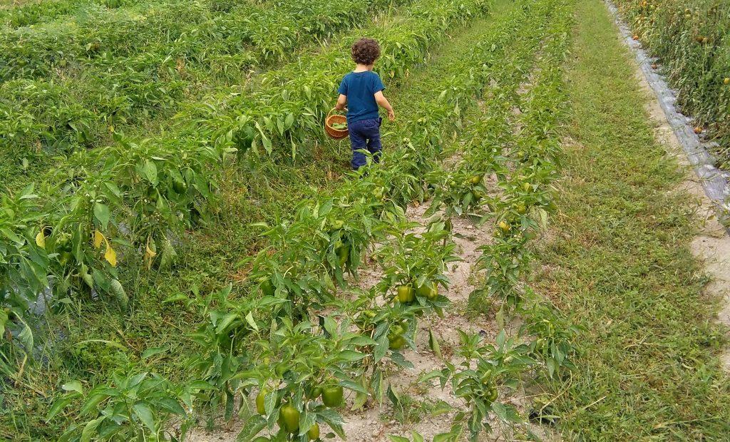 Cueillir ses fruis et legumes cueillette
